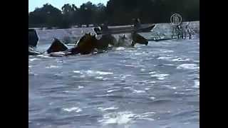 Лошадей спасают от наводнения вплавь по реке (новости)