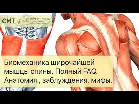 Биомеханика широчайшей мышцы спины. Полный FAQ. Упражнения, заблуждения, мифы