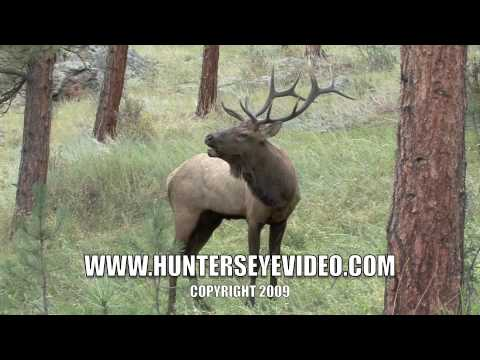 Sept 2009 Elk Bugle Quick Time 2