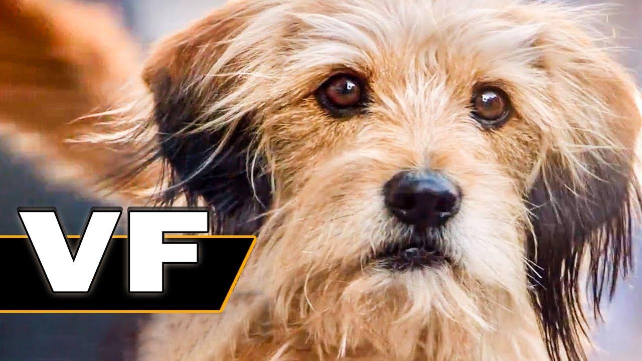 BENJI Bande Annonce VF (Famille, Netflix, 2018)