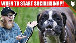 WHEN TO START SOCIALISING MY BOXER PUPPY
