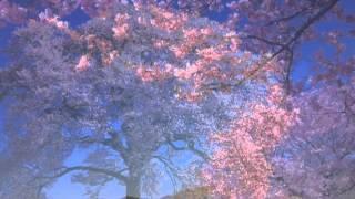 母の日に捧げるバラード 作詞・作曲・歌:栗林克己 ニックネーム:クリス.
