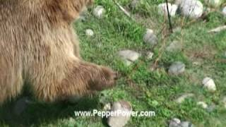Bear Shocked With Electric Fence. Udap Bear Shock Electric Food Fence (forest Service Approved)