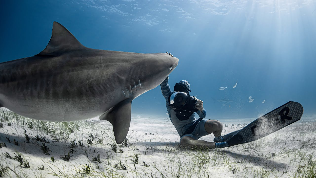 SHARK Diving With HUGE Tiger Sharks AND Hammerhead In Bahamas (DANGEROUS ADVENTURE)