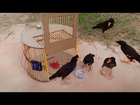 TR Technology: Bird Trap technology make from Cardboard 2019 - Amazing bird trap