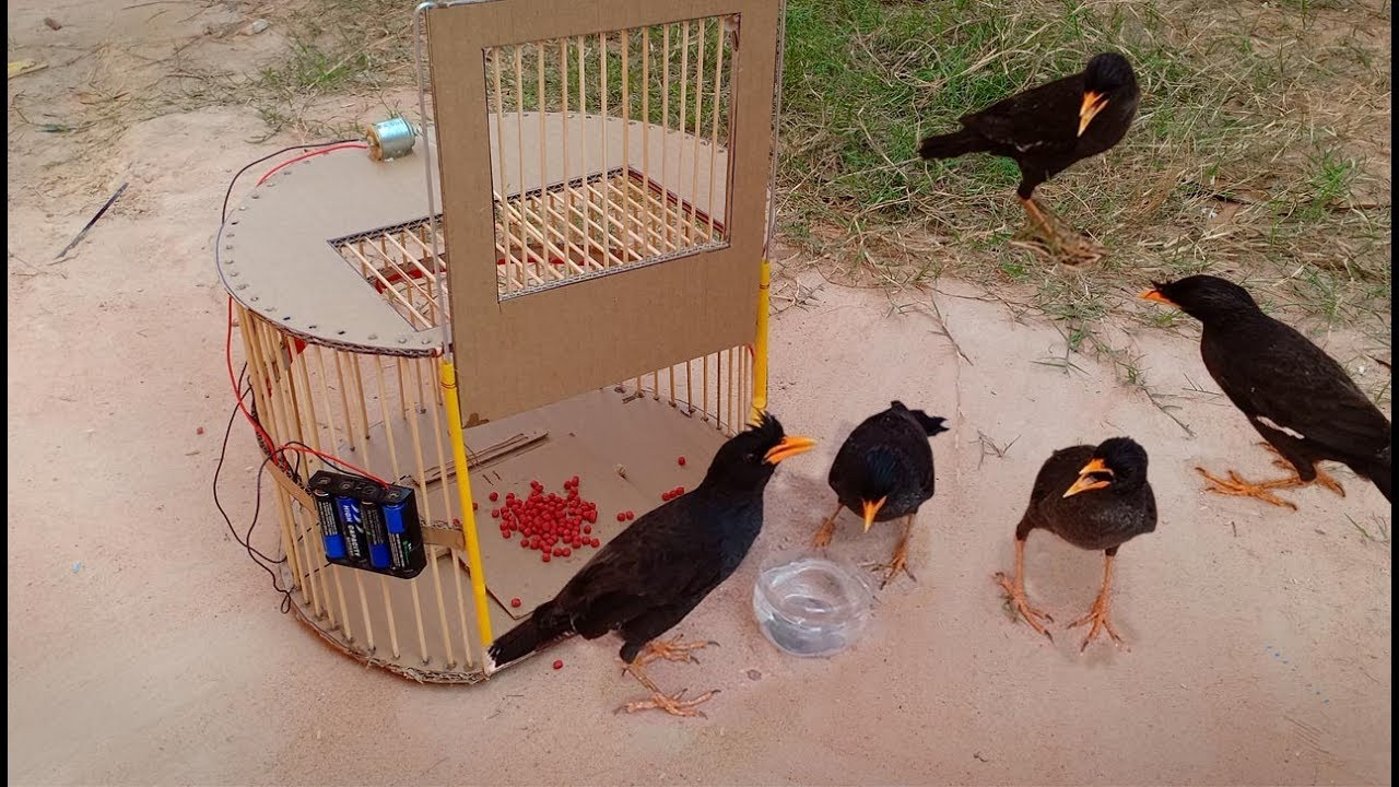 TR Technology: Bird Trap technology make from Cardboard 2019 - Amazing bird trap