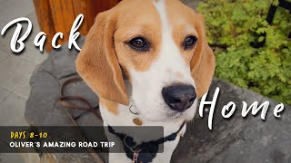 Cute beagle's amazed reaction to returning home