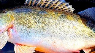 ТАКОЙ НАГЛОСТИ НА РЫБАЛКЕ Я ЕЩЕ НЕ ВИДЕЛ рыбалка зимой на судака 2021