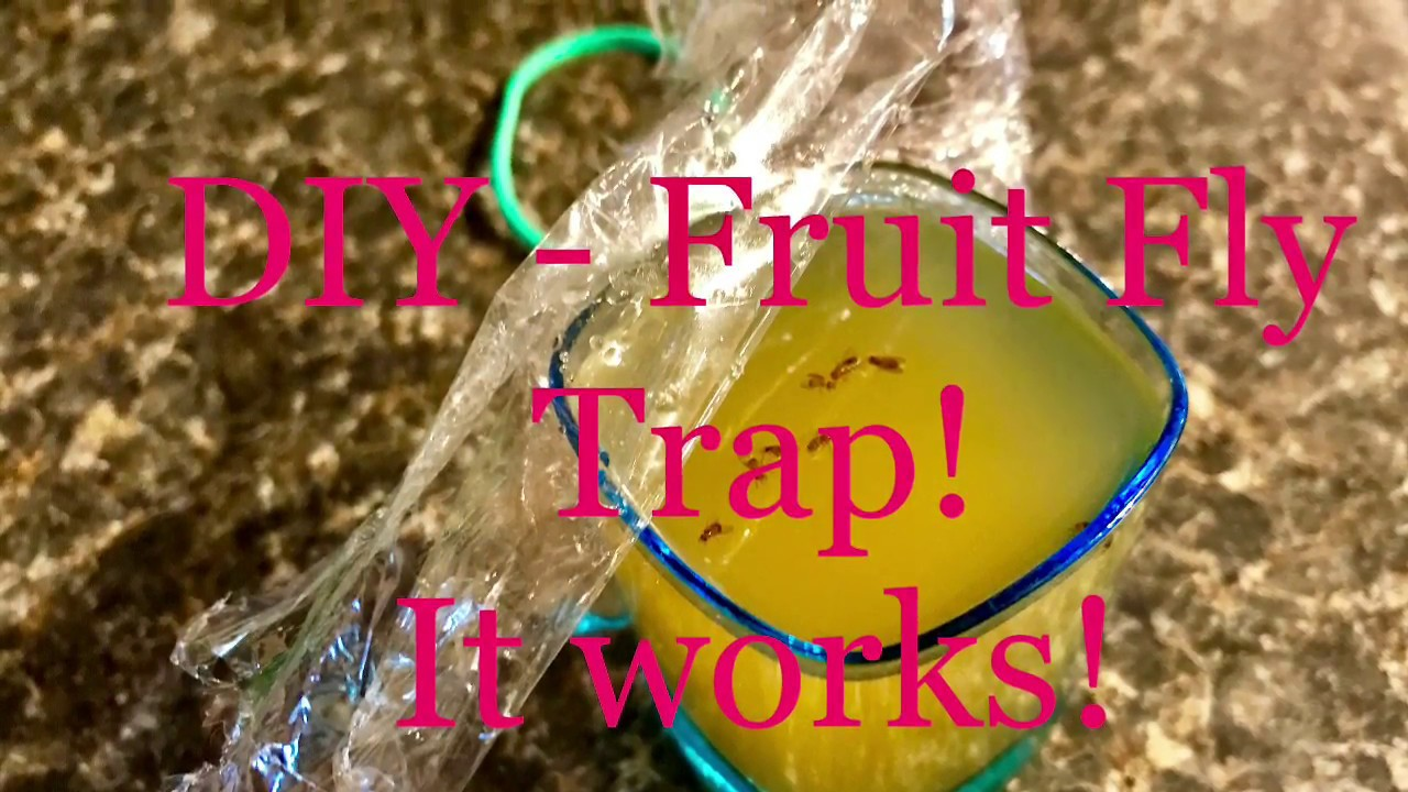 how to make a diy homemade fruit fly trap for your kitchen everyday bbq youtube. Black Bedroom Furniture Sets. Home Design Ideas