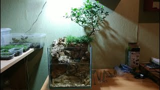 Акватеррариум, аквариум, палюдариум... Что это?)