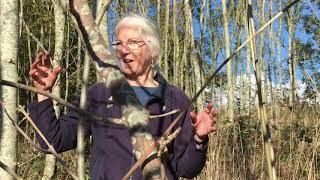 Brockholes - Invertebrates - Tullgren Funnels & Water Trays