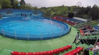 Шоу дельфинов в Ялте