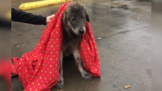 Dog Dumped In Parking Lot And Abandoned In The Rain Is Too Heartbroken To Move
