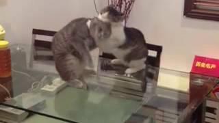 Cat Submission Slam