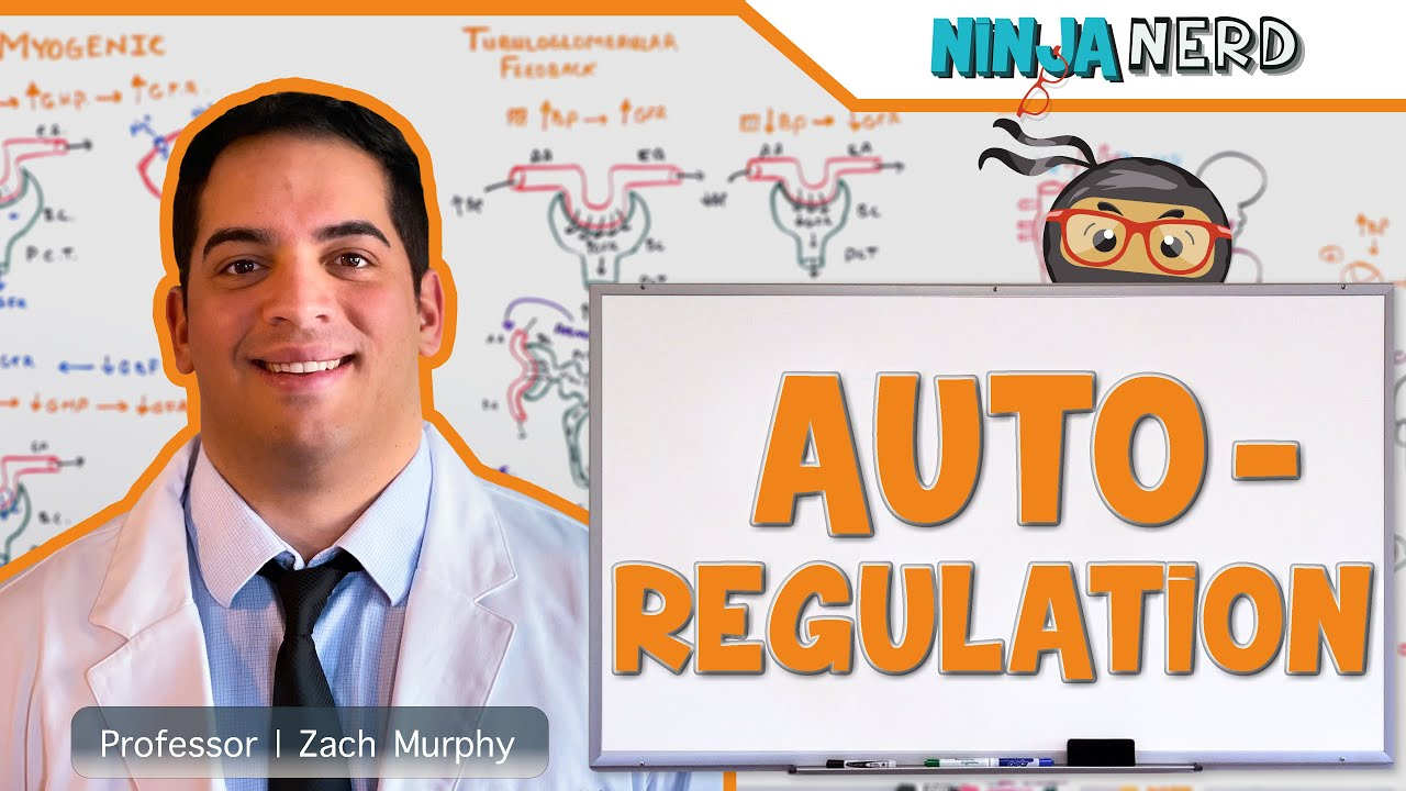 Renal   Autoregulation (Updated)