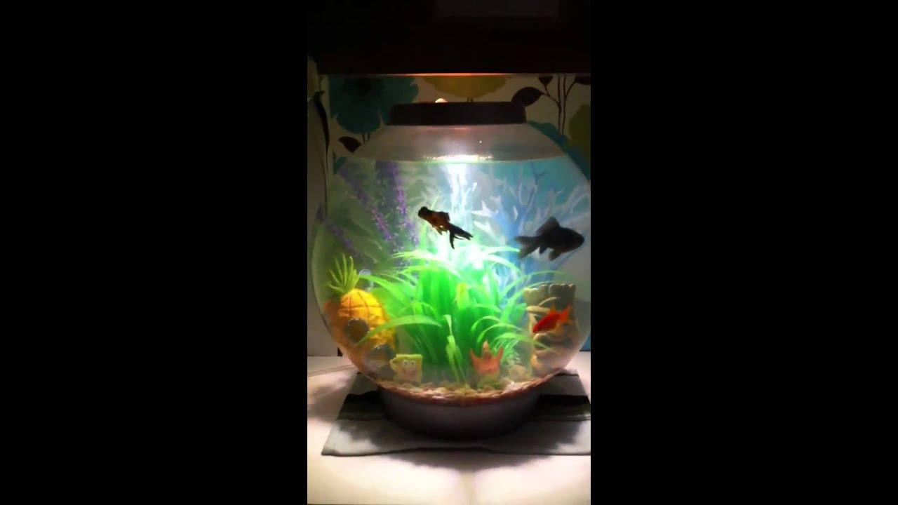 Biorb fish tank youtube for Fish tank youtube