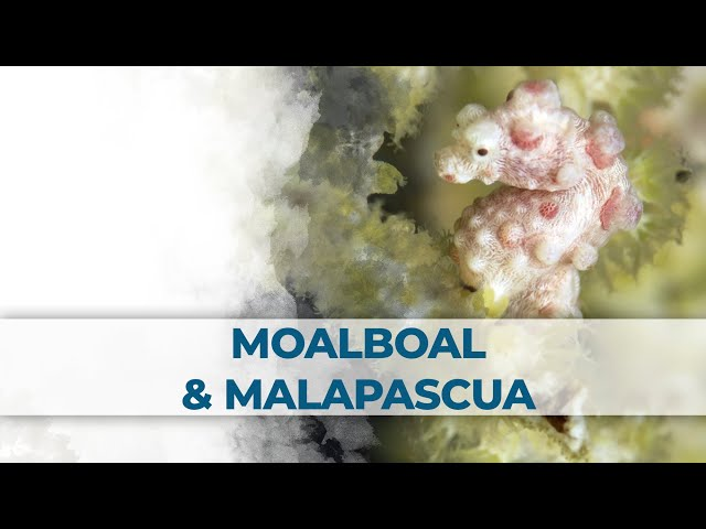 2 Little Divers - Buceo / Diving Filipinas - Moalboal & Malapascua 2017