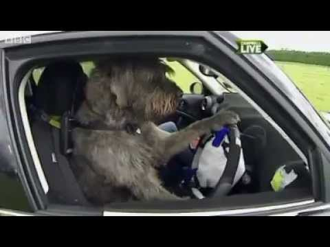 Old Lady Driving Car With Dog