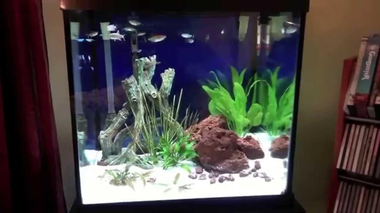 Marineland 27 Cube freshwater aquarium - 3 month update ...