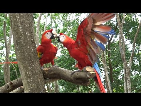 Mayan Ruins & Jungle Animals In Honduras!  (2.18 - 2.20.15)