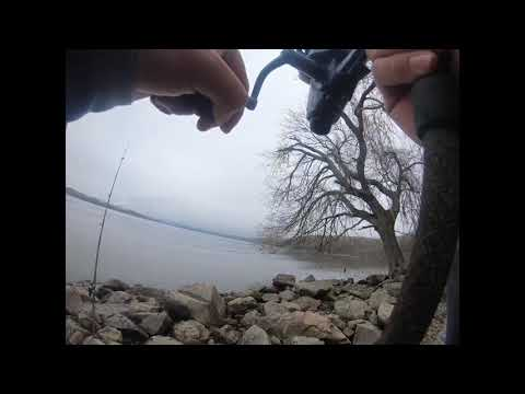 Hudson River Stripers Run 2020