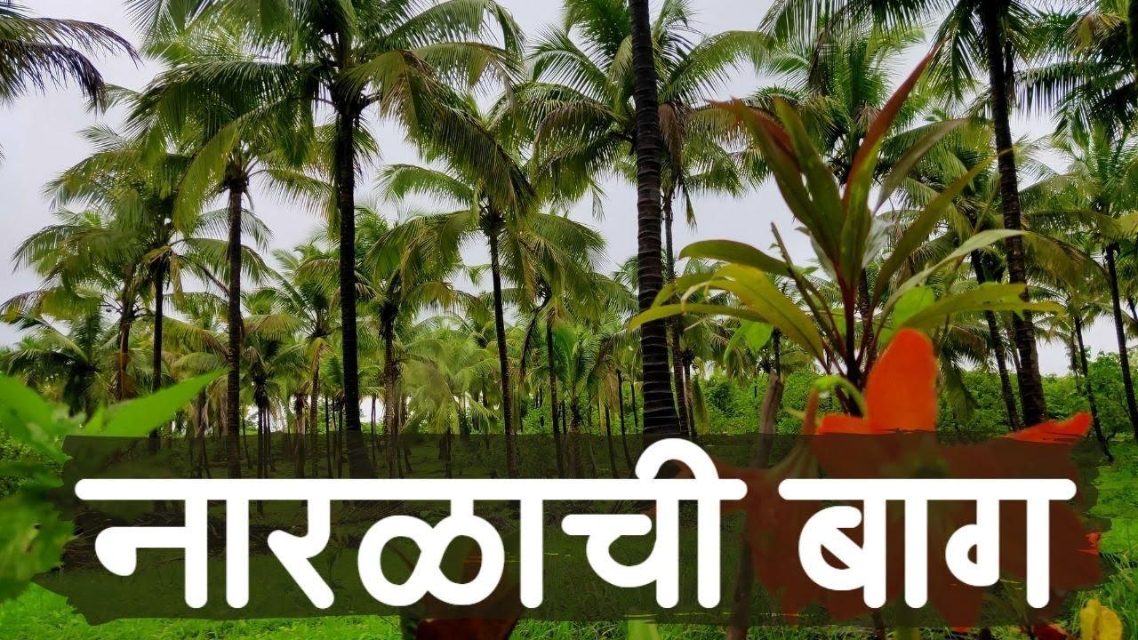 सिंधुदुर्ग मध्ये नारळाची वाडी.. किंमत फक्त ?