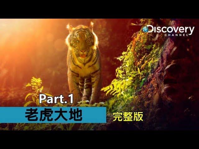 老虎與守護者的故事--《老虎大地》(Part 1)