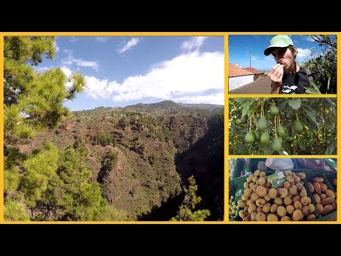 FIGS, ALMONDS & BARRANCOS - THE PUNTAGORDA MERCADILLO (FARMERS MARKET) : VOLCANIC ADVENTURES VLOG #2
