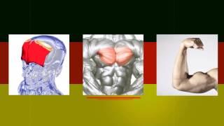 Урок немецкого языка № 4 | Мышцы . Новая методика обучения
