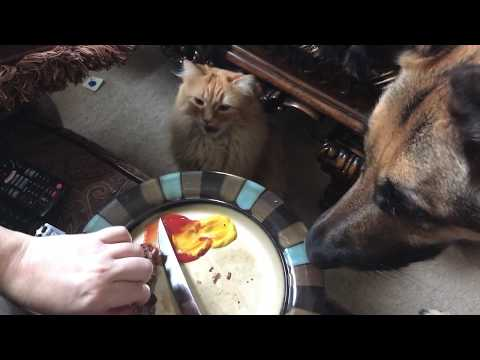 Dog and Cats try Steak🥩
