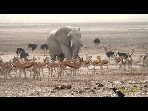 Etosha Nationalpark - Namibia - Oktober 2015