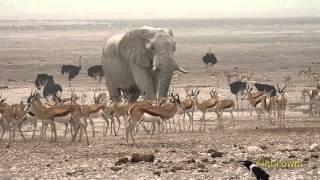 Video Etosha Nationalpark - Namibia - Oktober 2015 download MP3, 3GP, MP4, WEBM, AVI, FLV Desember 2017