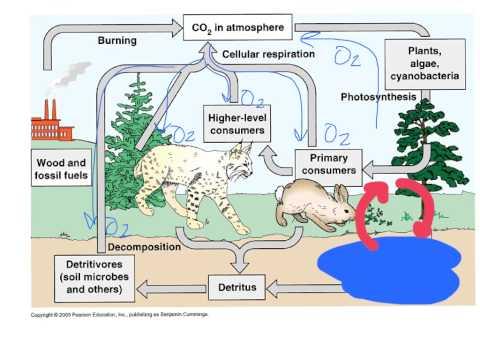 Unit 1.5 The Carbon & Nitrogen Cycles