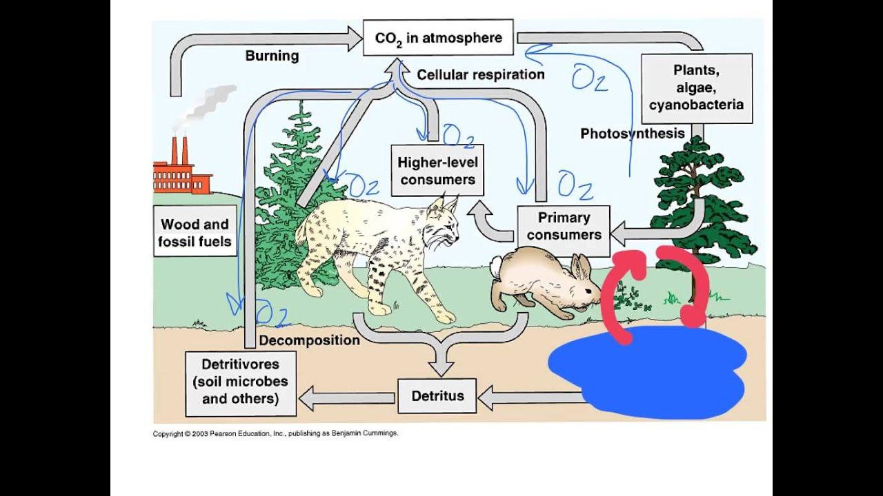 unit 1 5 the carbon nitrogen cycles [ 1280 x 720 Pixel ]