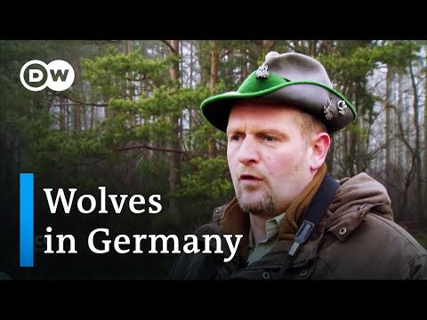 Can wolves and humans coexist in Germany?