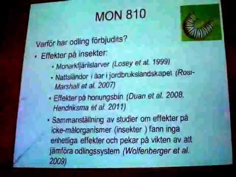 03_Monsantos GMO-majs MON810 i Borgeby i Skåne