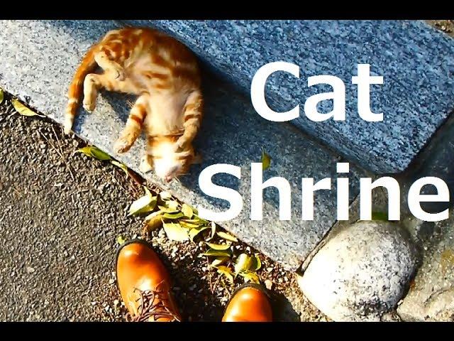Cat Shrine ねこ神社 =^・ェ・^=