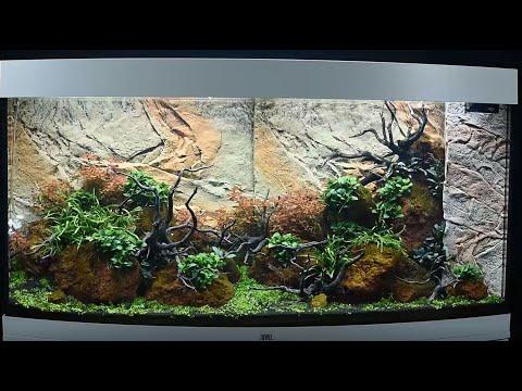 Juwel Aquarium Vision 260 Einrichtungsbeispiel / Tutorial