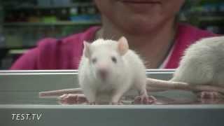 Крысы в доме!