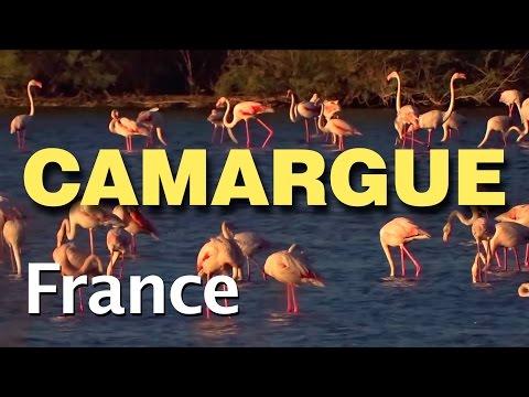 La Camargue, Aigues Mortes, le Pont du Gard, Sète, Nîmes, et les environs de La Grande Motte...