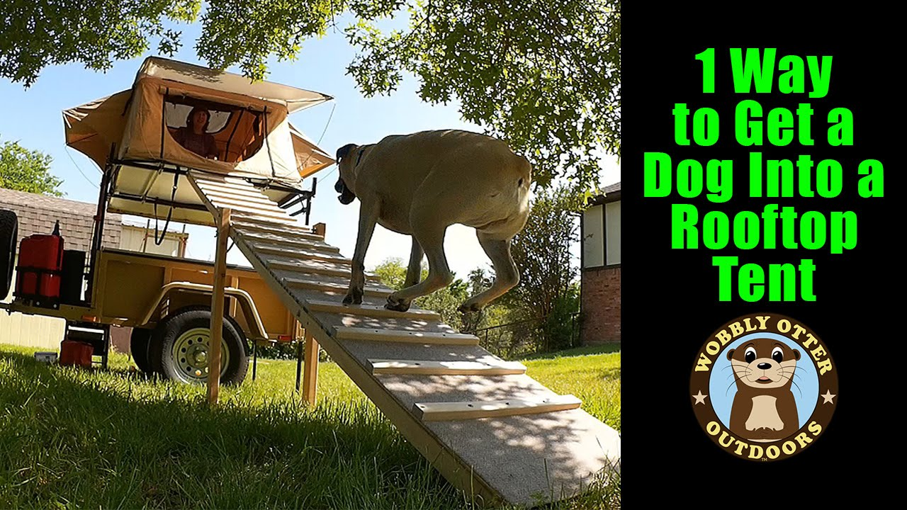 & 1 Way To Get A Dog Into A Rooftop Tent - A Ramp - YouTube