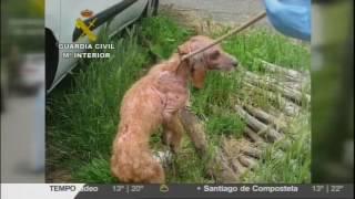 Detido un veciño de Soutomaior por maltratar animais