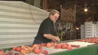 Just Peachy | Efurd Orchards