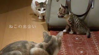 先住猫と新入り子猫の初対面!果たして相性は?