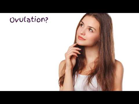 What Is Ovulation & How to Keep Track of Your Cycles?