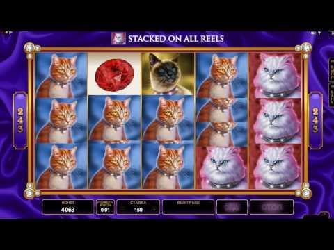 голдфишка казино Сага о котиках часть 3