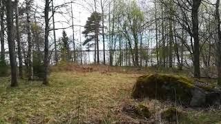 Финляндия, Вааса, заяц в лесу