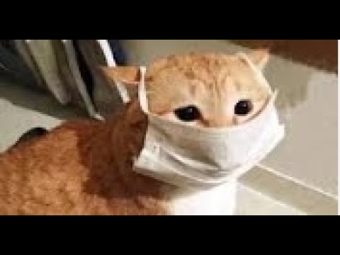 Download Tag Your Cat Here ,This compilation of smart cats will leave you astonished!,sticky paws