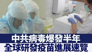 中共病毒爆發半年 全球研發疫苗進展速覽 新唐人亞太電視 20200603