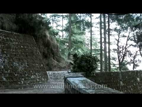 Steep road leading up to Landour, above Ruskin Bond's house